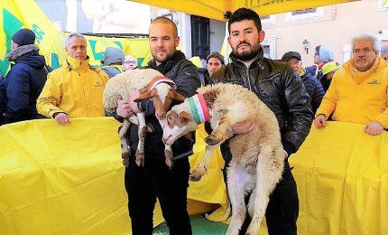 La protesta di agricoltori e pastori sardi in piazza Montecitorio