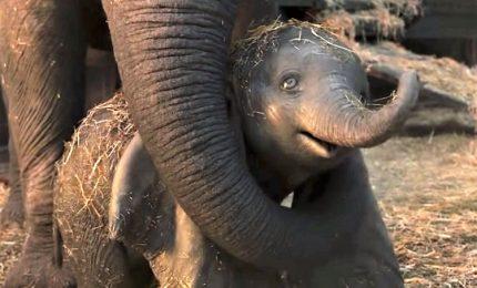 Tutti pazzi per Dumbo alla prima del film di Tim Burton a Roma