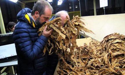 Philip Morris investe in Italia 500 milioni di euro su filiera tabacco