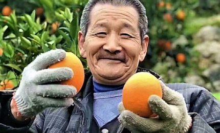 """Le """"arance"""" di Di Maio e il """"porto"""" di Xi, tutti pazzi per la Cina"""
