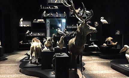 L'imprevedibile stupore della Natura a Palazzo Reale a Milano