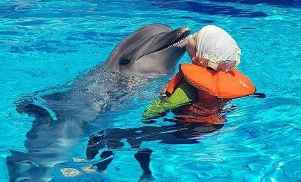La delfino terapia di studiosi italiani sbarca a Dubai