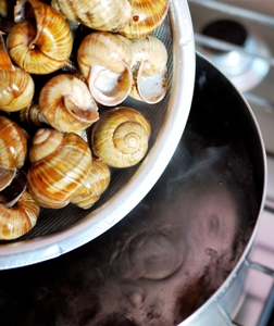 """""""Chiacchiere tra Escargots"""", lo chef che produce lumache"""