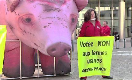 Un maiale gigante al Parlamento Ue, la protesta di Greenpeace