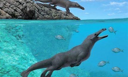 Scoperti in Perù i resti fossili di una balena quadrupede