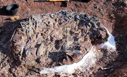 Scoperto cimitero di dinosauri, risale a 220 milioni di anni