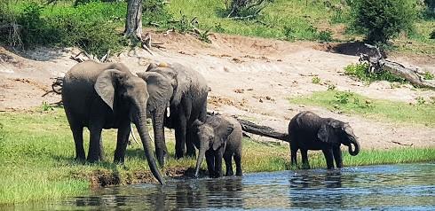 Botswana leva il divieto di caccia all'elefante