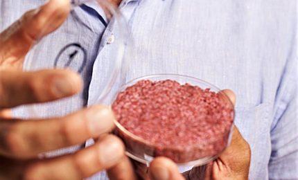 Verso la commercializzazione della carne coltivata