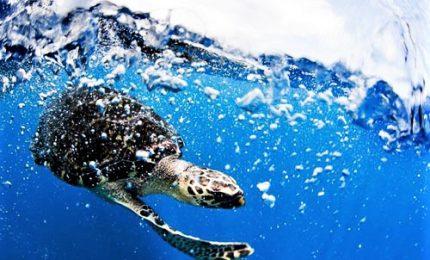 """Greenpeace: """"I mari soffocano per la plastica"""""""