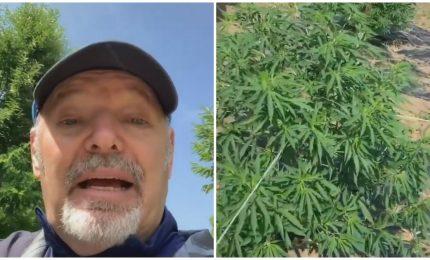 Vasco in piantagione di cannabis: c'è un'aria oscurantista