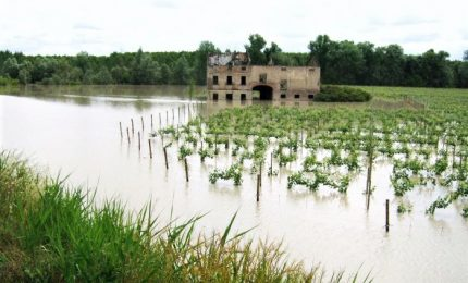 Maltempo, milioni di euro di danni all'agricoltura
