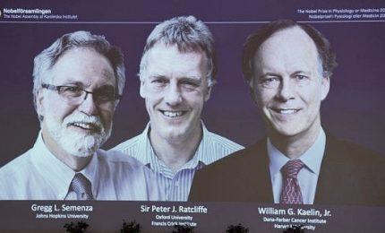 """Nobel Medicina ad americani Kaelin, Semenza e al britannico Ratcliffe. Scoperto """"sensore"""" cellule per variazioni ossigeno"""