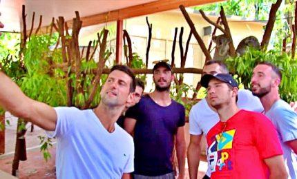 Novak Djokovic in visita al santuario dei koala in Australia