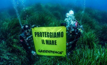 Plastica, clima, mari: un anno di battaglie di Greenpeace