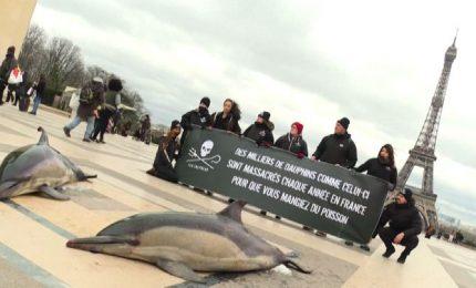 Delfini morti davanti Tour Eiffel, protesta degli animalisti