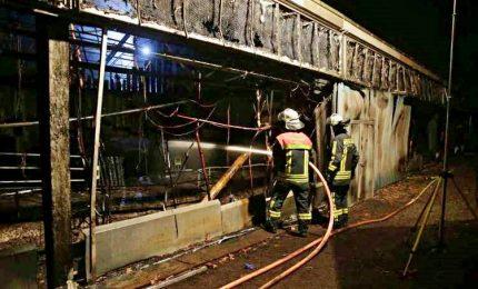 Incendio in zoo Krefeld: 30 animali uccisi, strage di primati