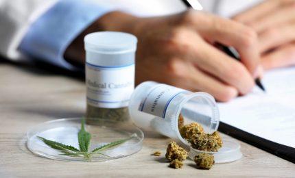 Cannabis, farmaci gratis per uso terapeutico