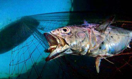 Premiato un italiano all'Underwater Photographer 2020