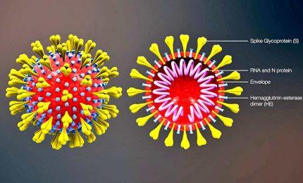 CoVid19, così si chiama la malattia causata dal nuovo coronavirus
