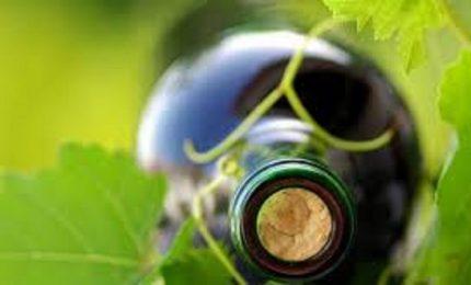 Oiv, su mondo del vino un effetto distruttivo