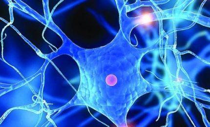 Così un gene controlla attività elettrica cervello