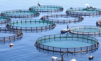 Fase 2, per allevamenti ittici la ripartenza ancora non c'è