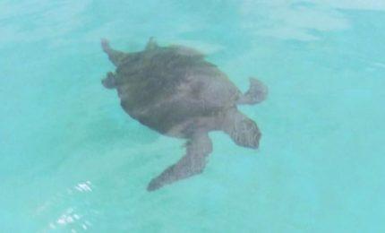 Così si salvano le tartarughe in Malesia: un uovo alla volta