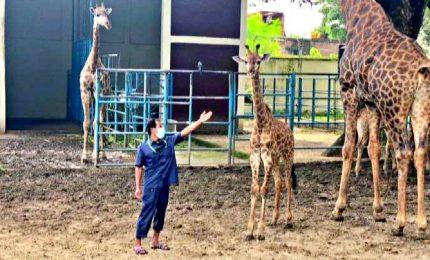 Record di cuccioli allo zoo di Dacca: merito del Covid