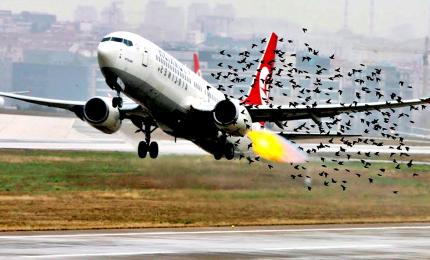 Una startup italiana con l'AI contro i pericoli del birdstrike