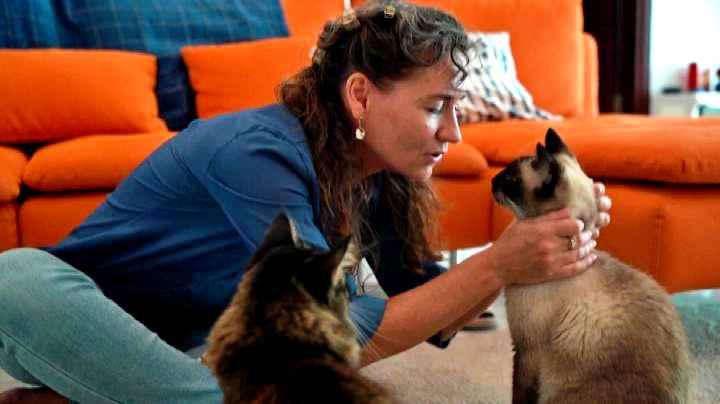 Se il gatto è aggressivo forse la colpa è del proprietario