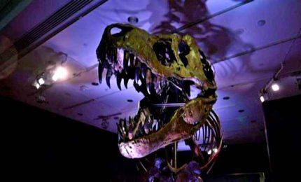 """Il T-Rex """"Stan"""" finisce all'asta, si attende vendita record"""