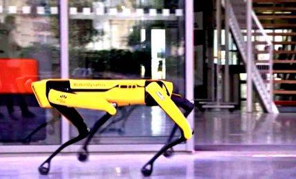 Cani robot per creare il più grande sito di scorie nucleari in Ue