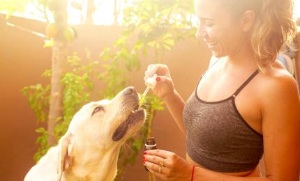 La Cannabis utile per la salute umana e animale