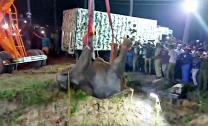 Inseguito da alcuni cani, elefante cade nel pozzo