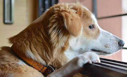 I cani e il lockdown: tante coccole ma nostalgia dell'aria aperta