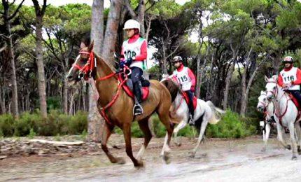 Viaggio nell'Accademy Equestre di Costanza Laliscia