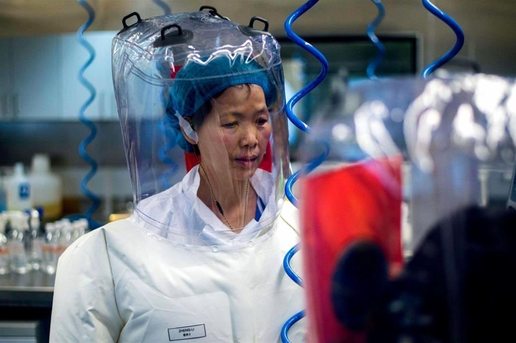 Oms: contagio Covid-19 da animale, no da fuga laboratorio