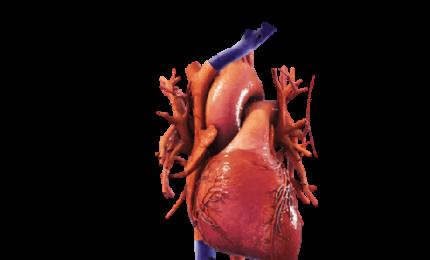 Medicina rigenerativa, creare vasi sanguigni con biostampa 3D