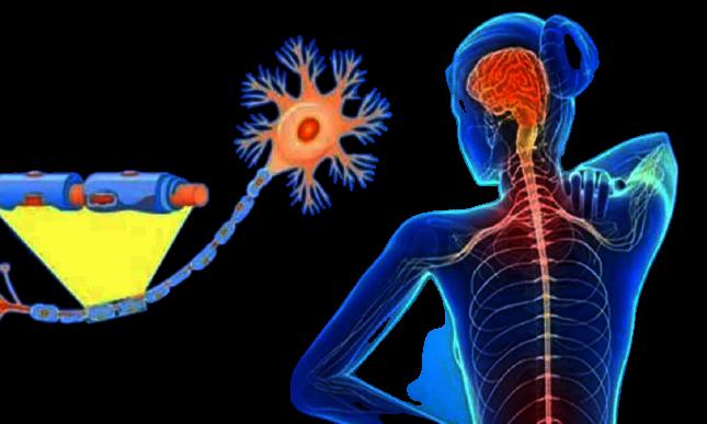 Sclerosi multipla progressiva, identificata proteina chiave