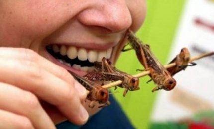 L'Ue verso prima autorizzazione di insetti come nuovi alimenti