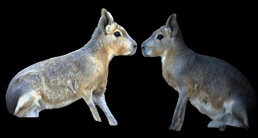 """Studio giapponese: i mammiferi possono """"respirare"""" con l'ano"""