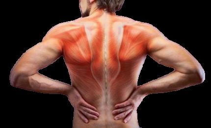 Anche i muscoli vengono compromessi con Covid