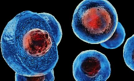 Cnr: l'alfa-sinucleina stimola cellule staminali neurali