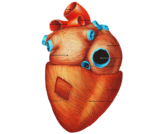 Post Covid, cardiopatia dilatativa è la malattia del futuro