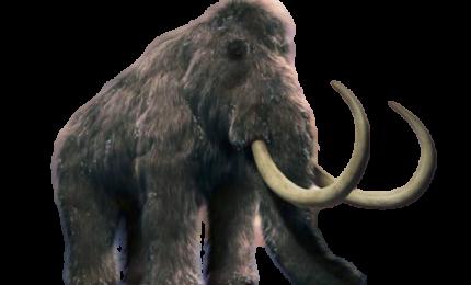 """Azienda raccoglie fondi per far """"risuscitare"""" il mammut lanoso"""