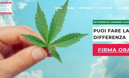 Referendum Cannabis, promotori: raggiunta quota 500.000 firme